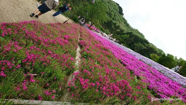 芝桜の小道(ヤマサ蒲鉾工場)8