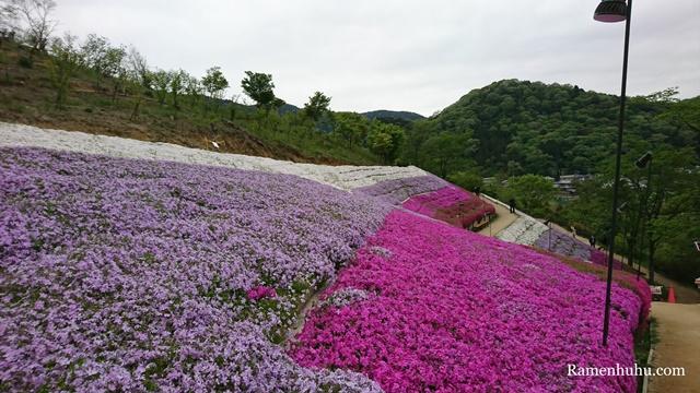 芝桜の小道(ヤマサ蒲鉾工場)9