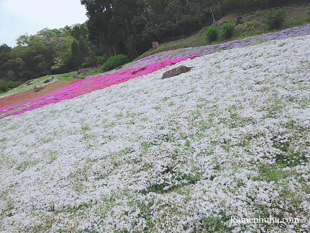 芝桜の小道(ヤマサ蒲鉾工場)10