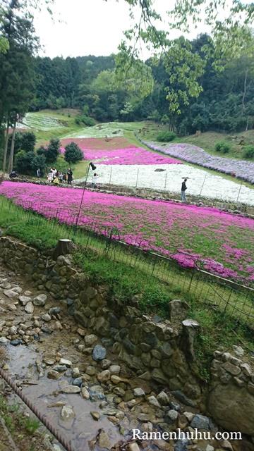 芝桜の小道(ヤマサ蒲鉾工場)11