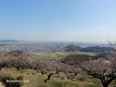 兵庫県たつの市にある「綾部山梅林」に行ってきました!園内の様子、駐車場、アクセスなど紹介