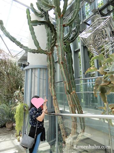 奇跡の星の植物館 プランツギャラリー