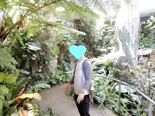 奇跡の星の植物館 シダルーム