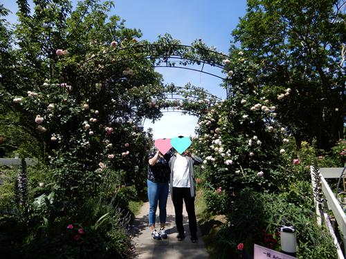 奇跡の星の植物館のローズガーデン