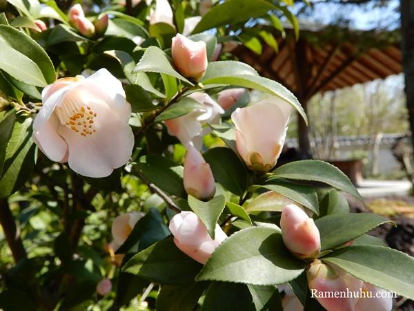 姫路城西御屋敷跡庭園 好古園24