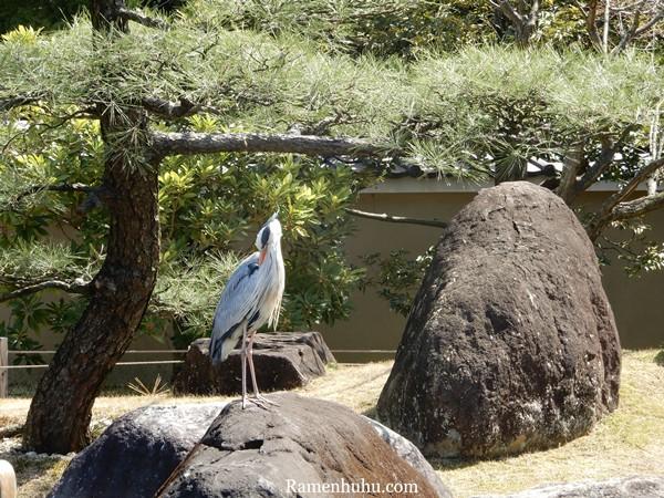 姫路城西御屋敷跡庭園 好古園26