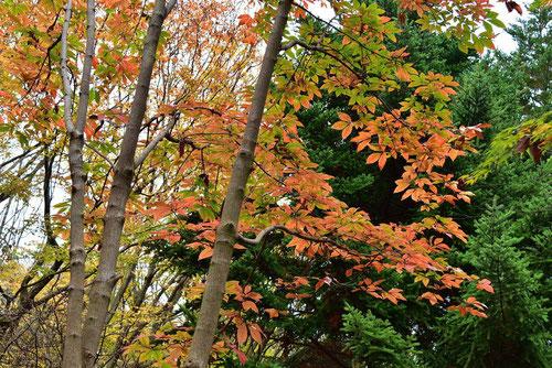 姫路城西御屋敷跡庭園 好古園31
