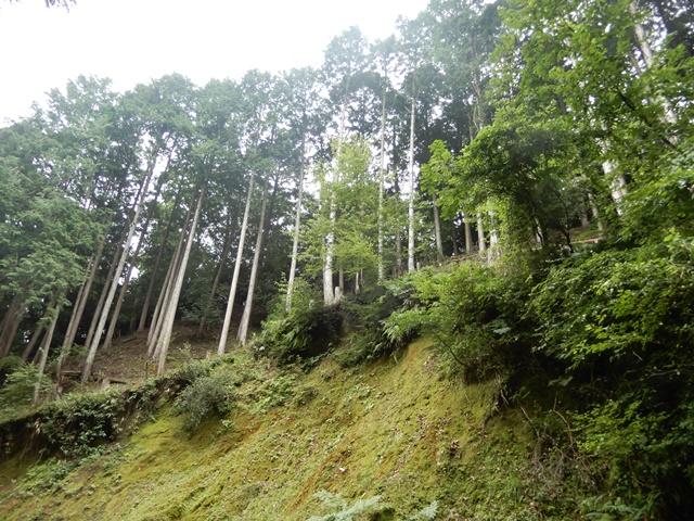 竹田城跡へ向かう山道