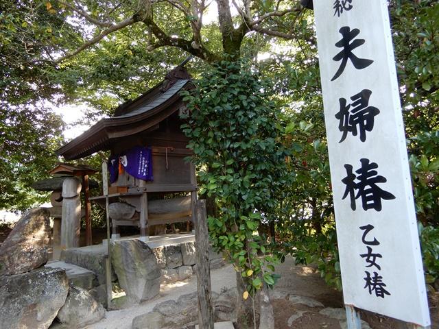 八重垣神社 夫婦椿1