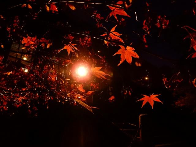 御嶽山 播州清水寺 紅葉ライトアップ