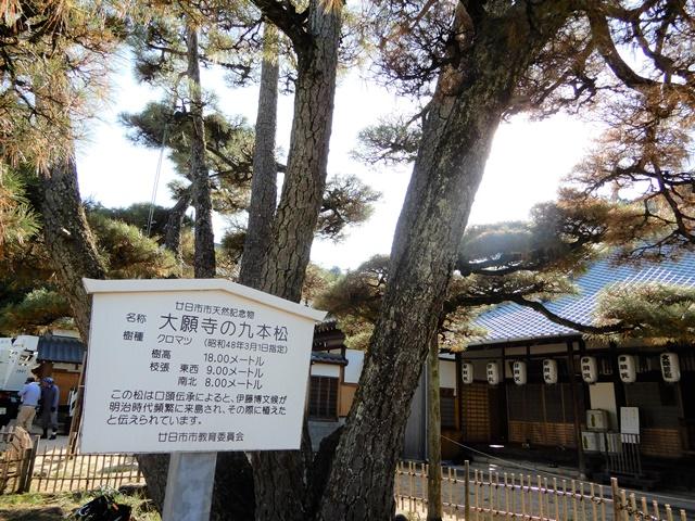 大願寺 9本松