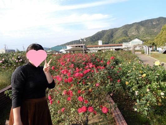 よしうみバラ公園 赤いバラ