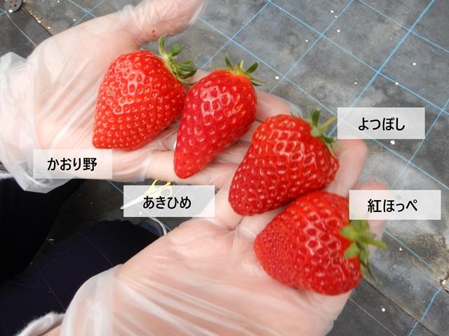 ゆめさき苺ハウス いちご全種類