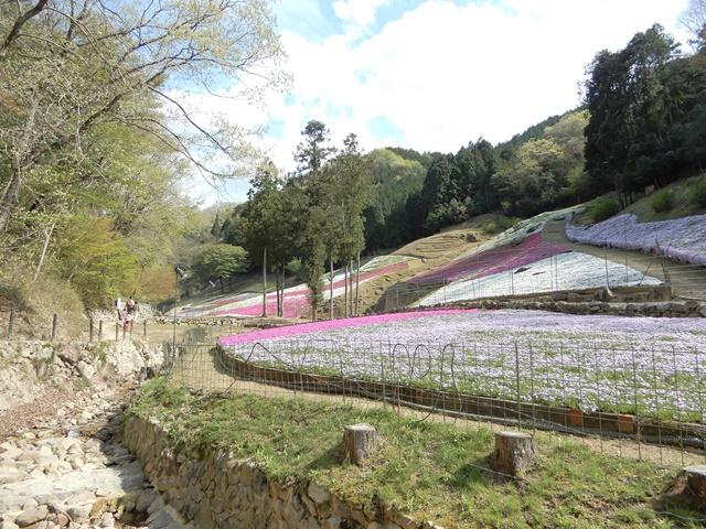 ヤマサ蒲鉾工場 芝桜