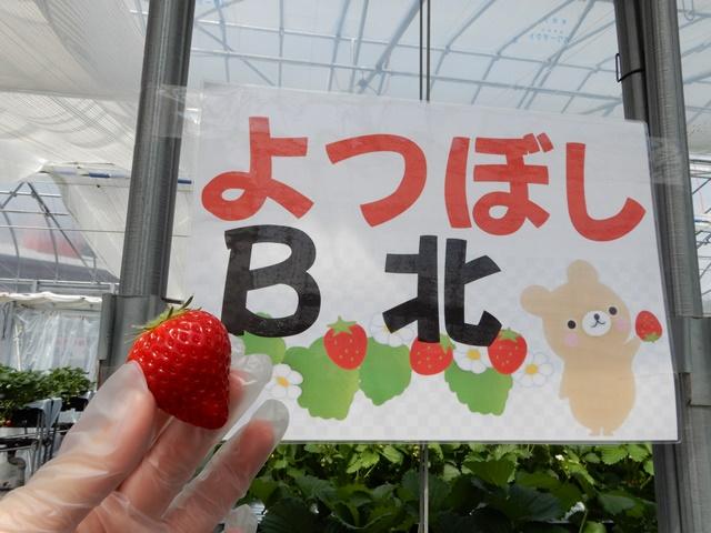 ゆめさき苺ハウス よつぼし
