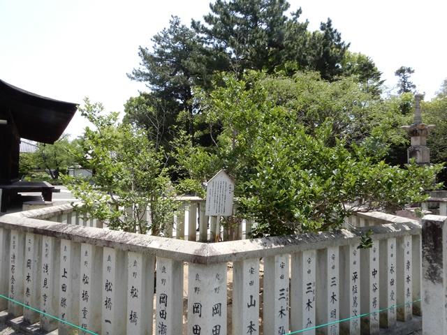 鶴林寺 沙羅双樹