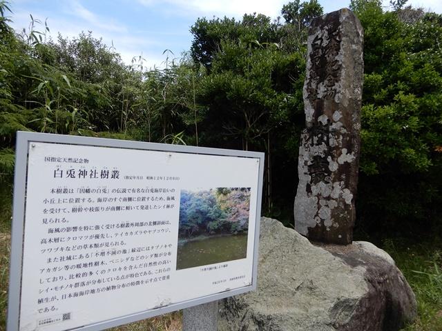 白兎神社樹叢(社叢)