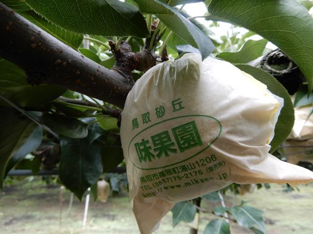 味果園 梨の木