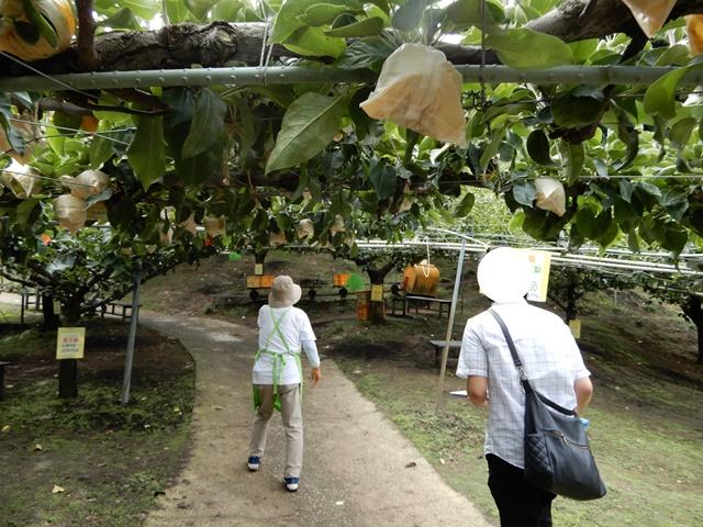 味果園 園内の案内